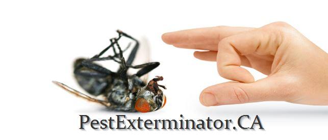pest control company in edmonton killing a cockroach